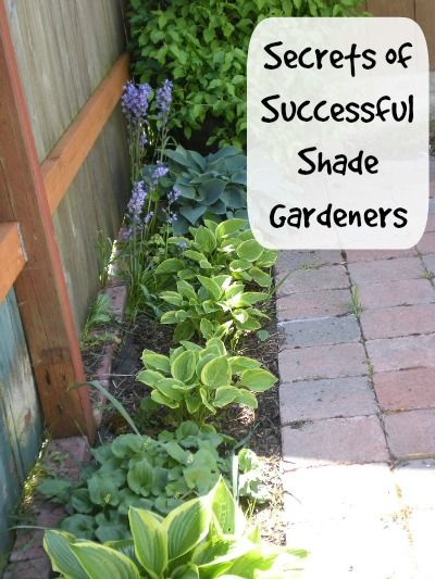 The 25 Best Ideas About Shaded Garden On Pinterest Shade