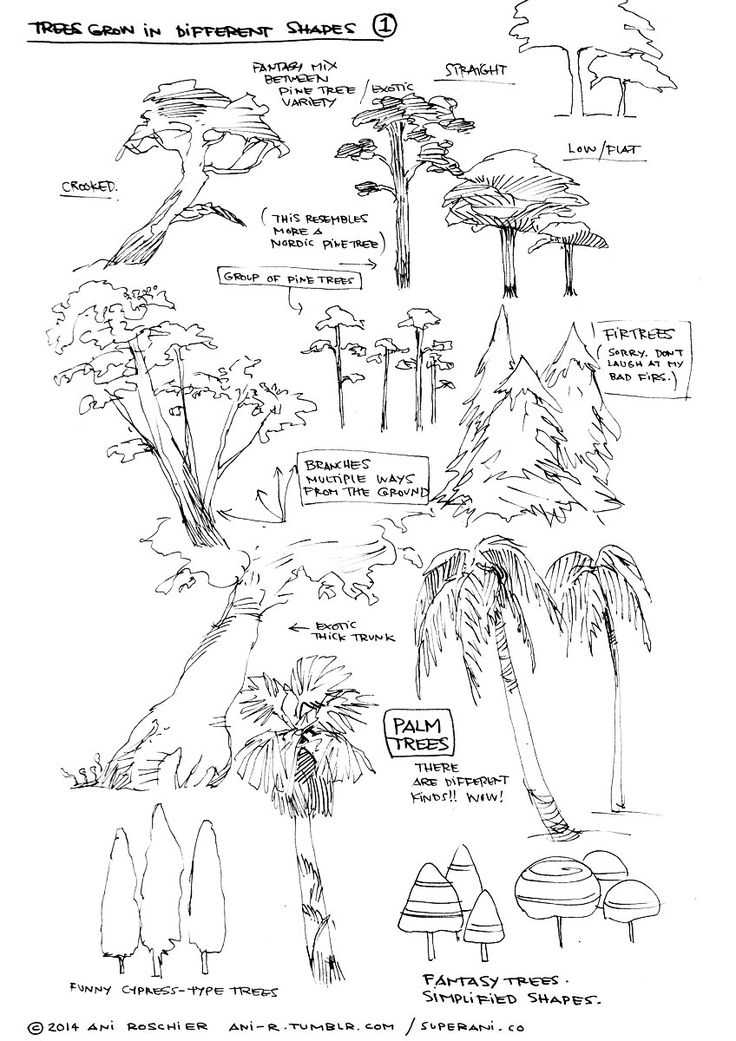 16 best images about How to Draw Realistic Trees, Plants