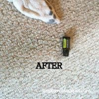 25+ best ideas about Remove paint from carpet on Pinterest ...