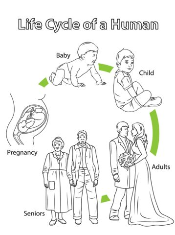 25+ Best Ideas about Stages Of Human Development on