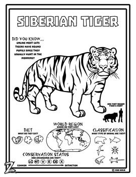 213 best images about Zoo Teaching Unit on Pinterest