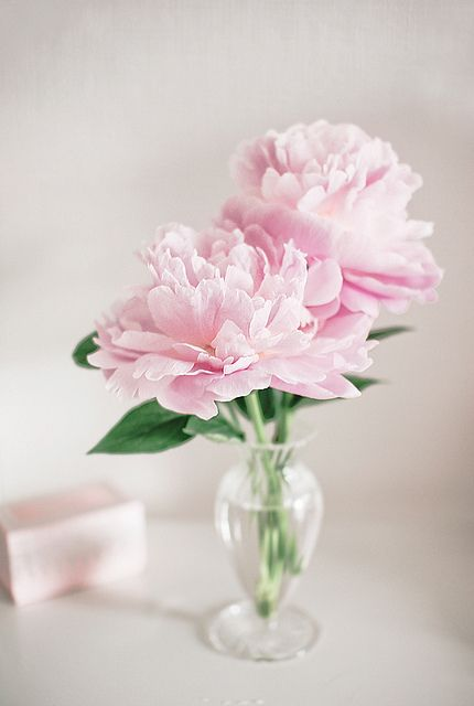 Pink peonies Peonies and Small vases on Pinterest