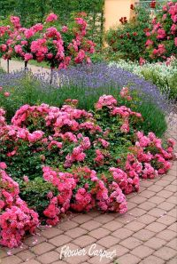 65 best images about Garden Designs with Roses on ...