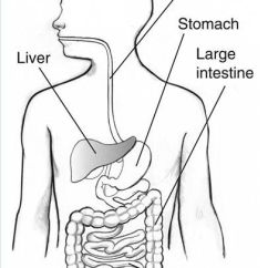 Blank Digestive System Diagram To Label 2004 Silverado Wiring For Kids | Science Body Systems Pinterest