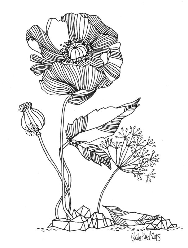 348 best images about Floral Coloring Pages for Adults on
