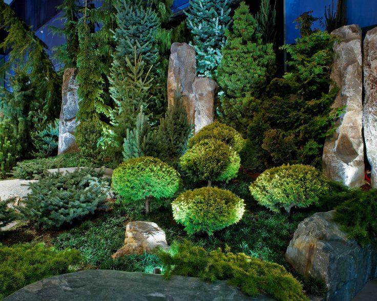Les 152 Meilleures Images à Propos De Conifer Garden Sur Pinterest