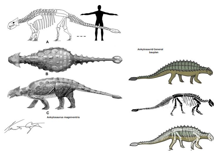 187 best images about Dinosauricon A : Ankylosaurus on