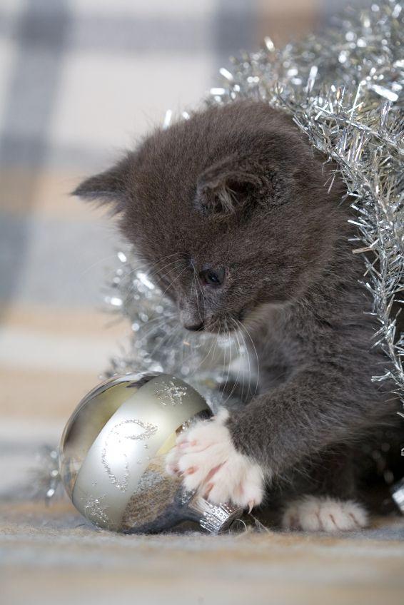 Christmas kitty.