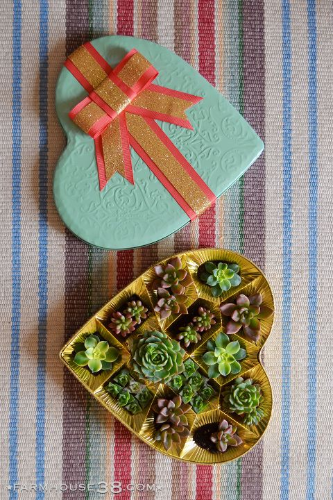 I Heart Succulents Upcycling A Valentines Day Heart