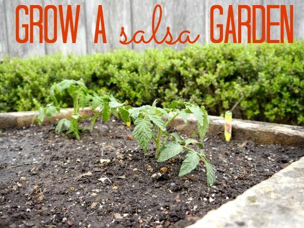 7 Best Images About Salsa Garden Ideas On Pinterest Gardens