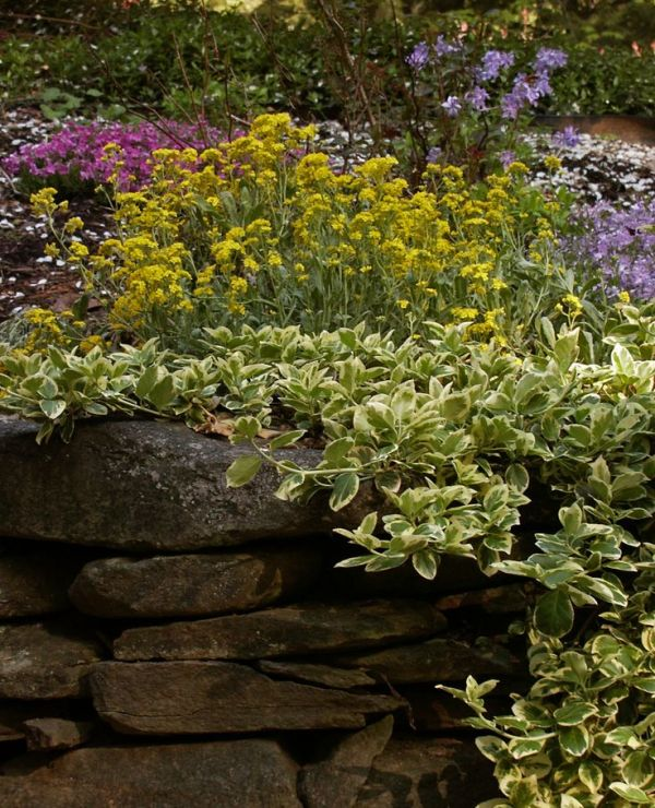 ideas plants cascade