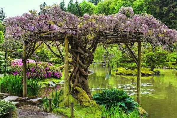 wisteria farm arbor