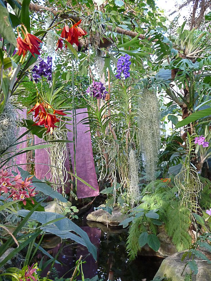 17 Best images about JARDINES TROPICALES on Pinterest  Gardens Orchid flowers and Banana plants