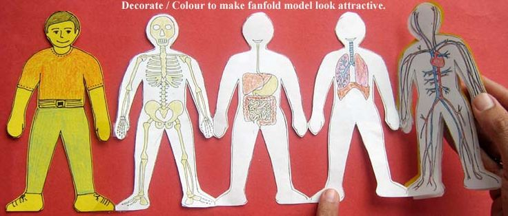 human body systems paper doll idea | Kid Projects ...