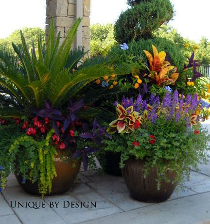 25 Best Ideas About Potted Plants On Pinterest Potted Plants