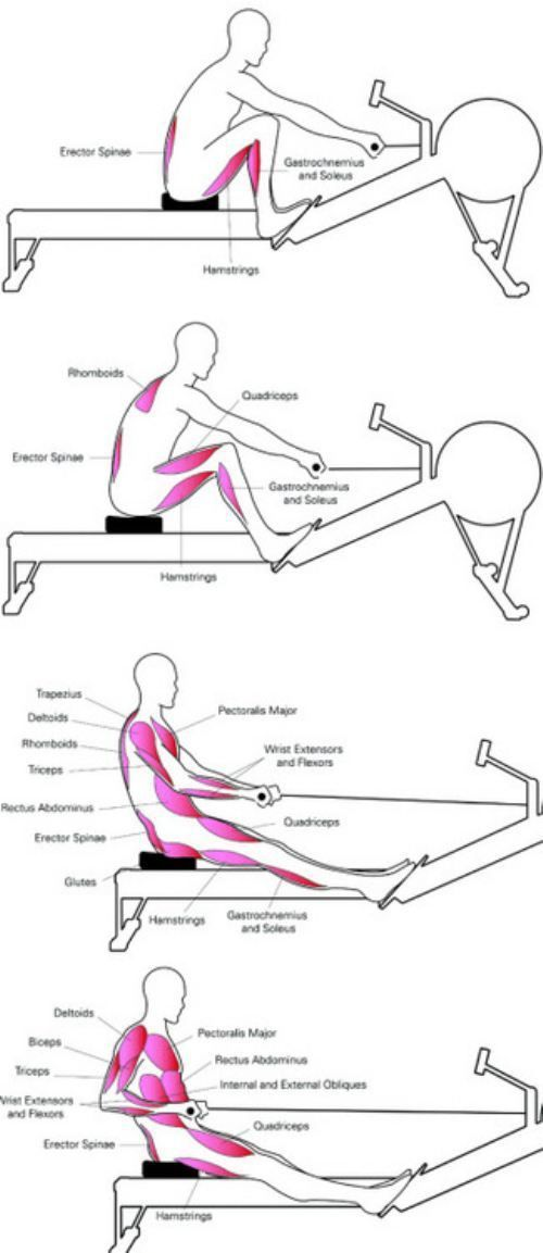 1000+ ideas about Rowing Machine Workouts on Pinterest