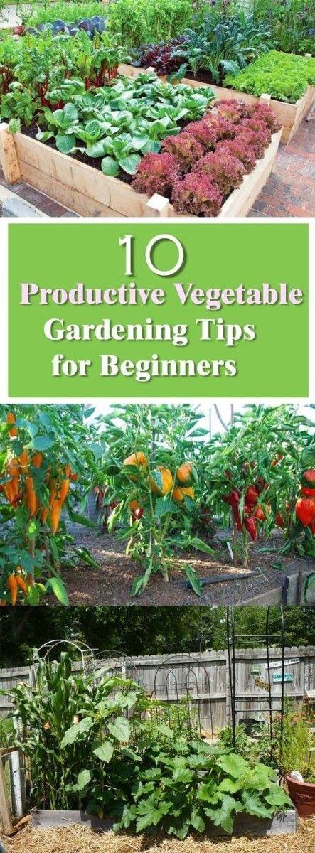 25 Best Ideas About Vegetable Gardening On Pinterest Gardening