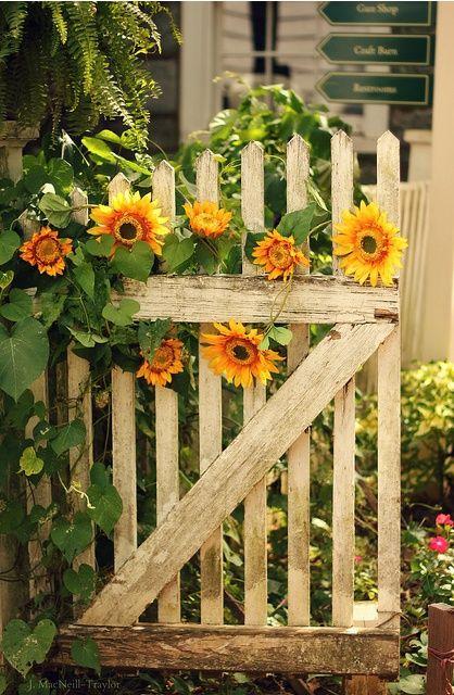 25 Best Ideas About Sunflowers On Pinterest Sun Flowers Smile