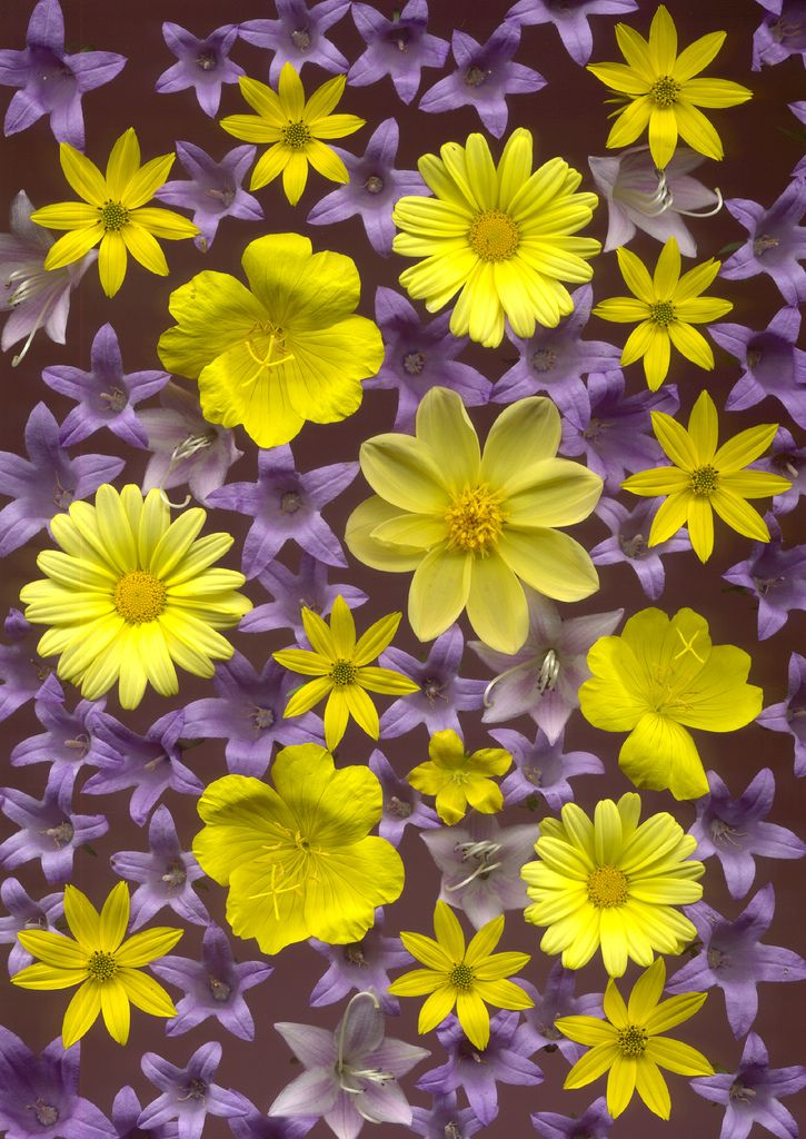 115 Best Images About Purple And Yellow On Pinterest