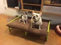 PVC Pipe Raised Dog Bed | Pictures of, DIY and crafts and ...