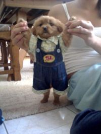 It's a puppy wearing people clothes! | Dog Clothes ...
