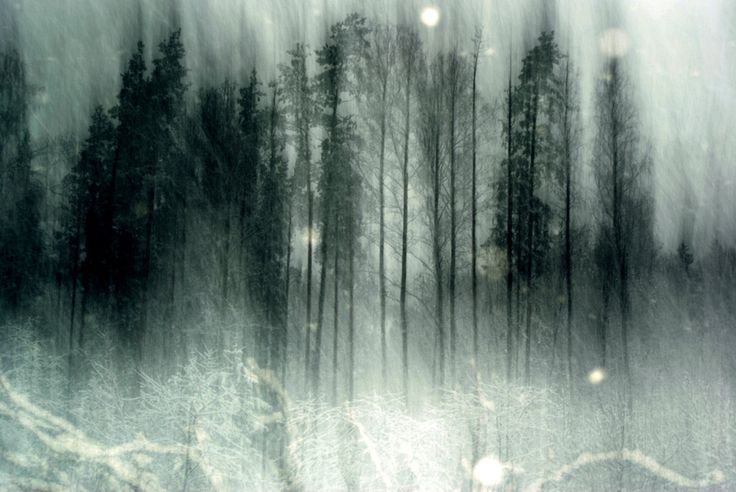 Haunted Forest Wallpaper Wallpapers Pinterest Forests Wallpapers And Forest Wallpaper