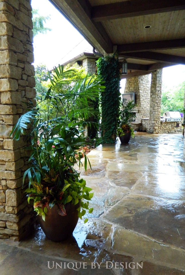 17 Best images about palm container garden on Pinterest  Planters Tropical gardens and Design