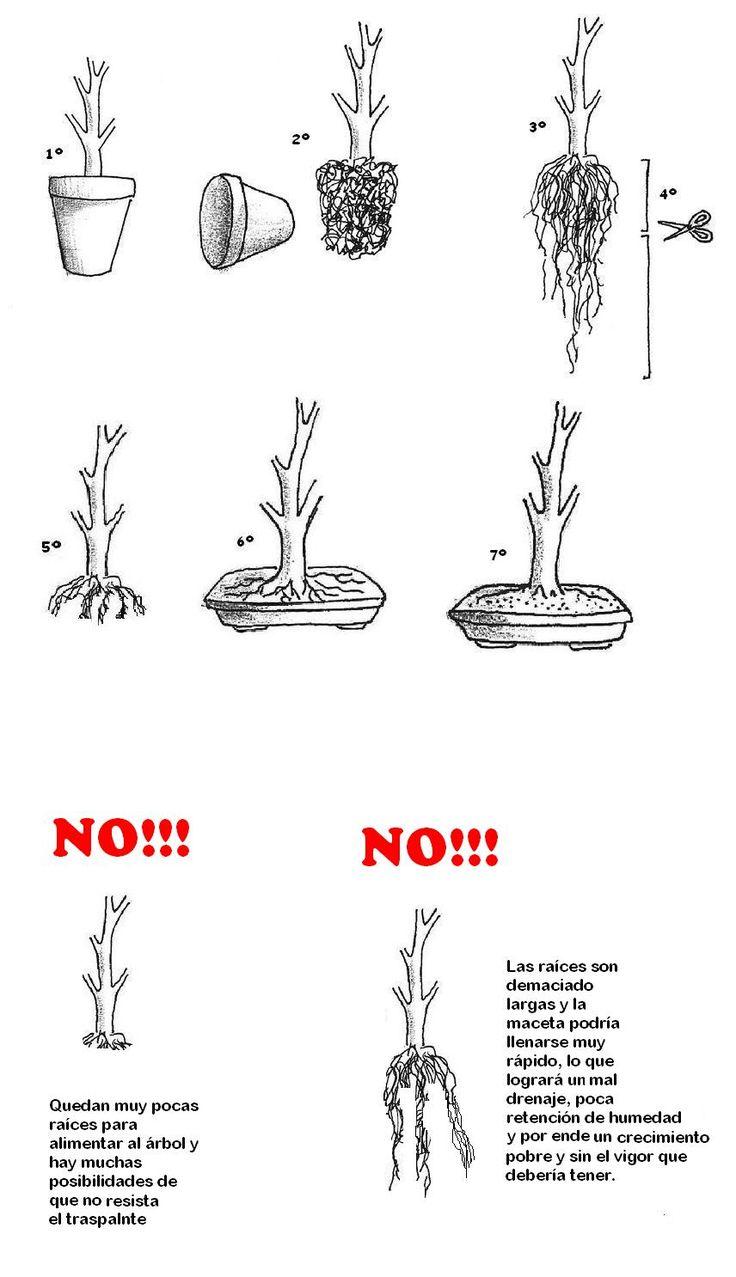 wiring acer bonsai