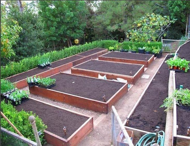 25 Best Ideas About Edible Garden On Pinterest Companion