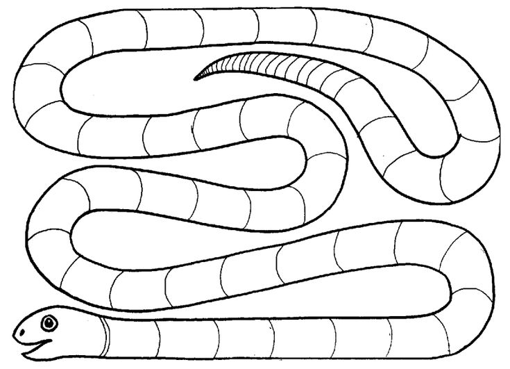 Syllable Snake Game. The teacher will say a word, and for