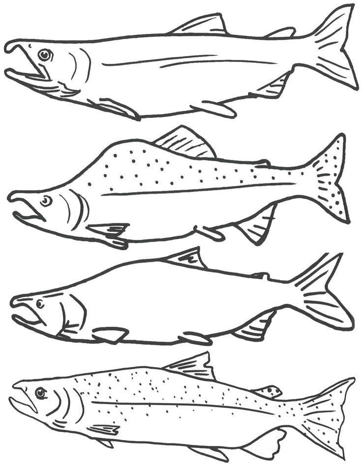 Free Coloring Page of Salmon Fish, Free Printable Fish