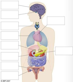 Free Diagrams Human Body | Human Body Diagram Blank | The