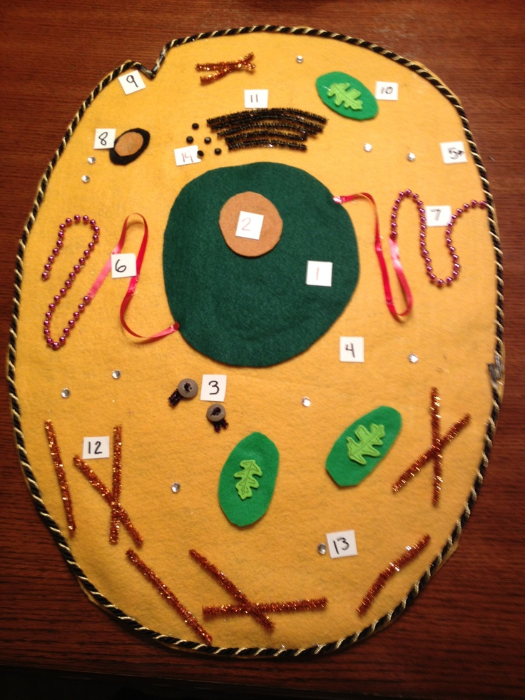 plant cell diagram project ideas baldor 10 hp electric motor wiring 1000+ images about & cells on pinterest | cakes, model and school science projects