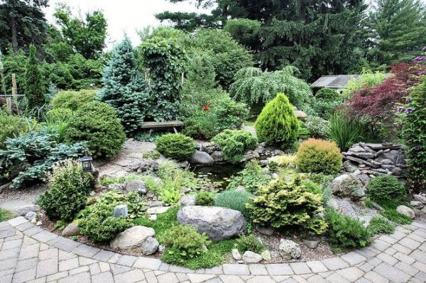 dwarf conifer garden in dewitt