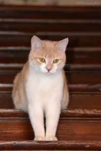 1000+ images about =^..^= On the stairs on Pinterest ...