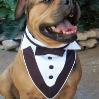 1000+ ideas about Dog Tuxedo on Pinterest | Dog Wedding ...