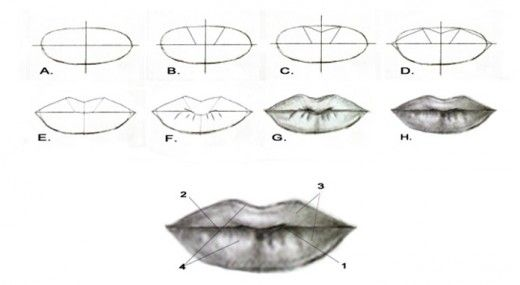 Portrait Drawing for the Ultimate Beginner: The Lips