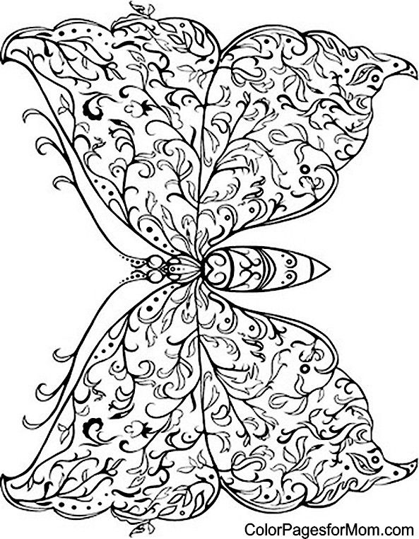 194 best images about Blackline- butterfly on Pinterest