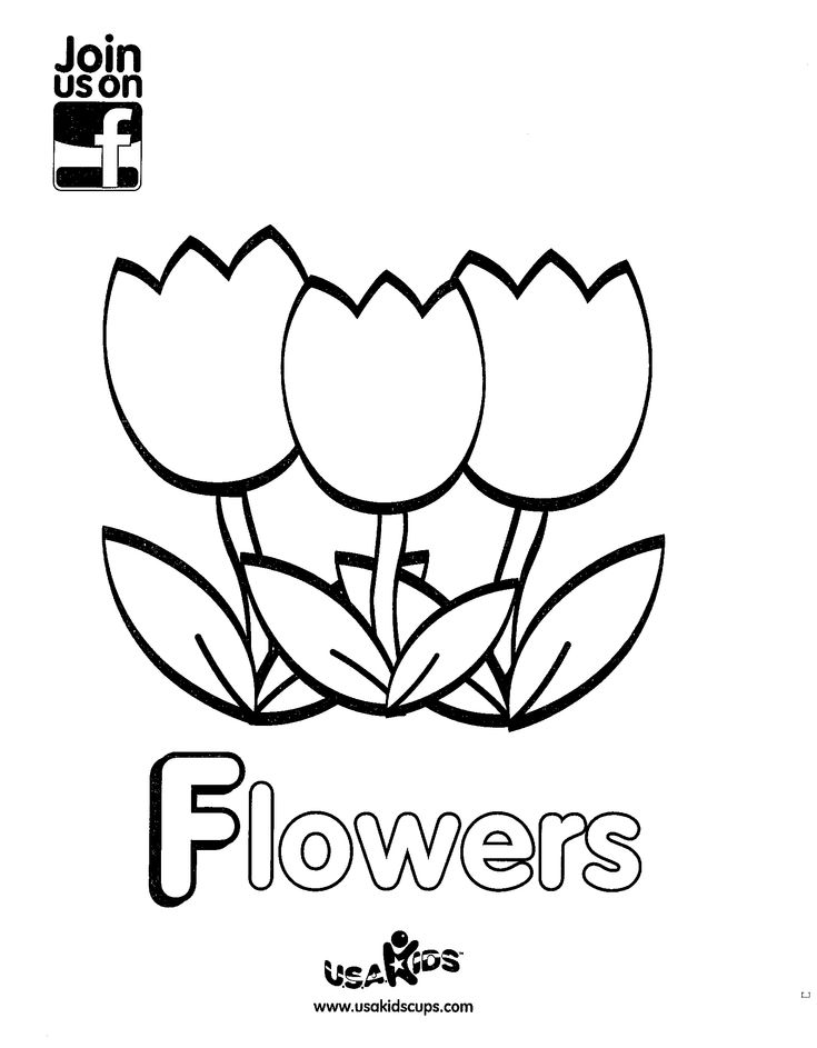 1000+ images about Flowers lesson ideas on Pinterest