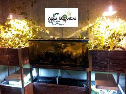Aqua Botanical indoor aquaponics system 55 Gallon fish