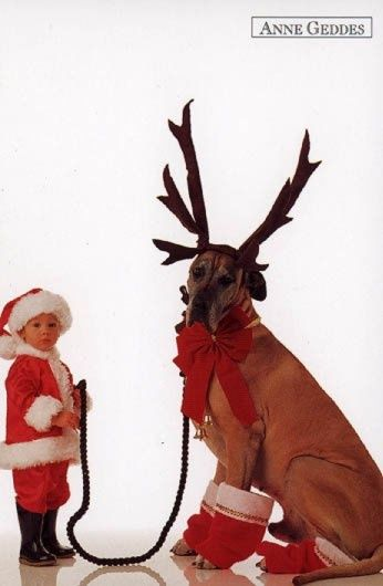 Reindeer Too Cute And Anne Geddes On Pinterest