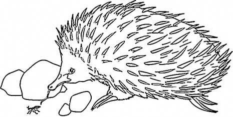 Colouring pages, Food and Echidna on Pinterest