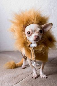 1000+ ideas about Pet Halloween Costumes on Pinterest ...