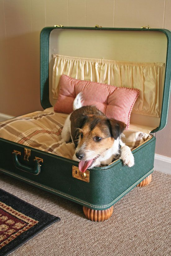 25 Best Pet Beds Ideas On Pinterest Dog Beds Diy Dog