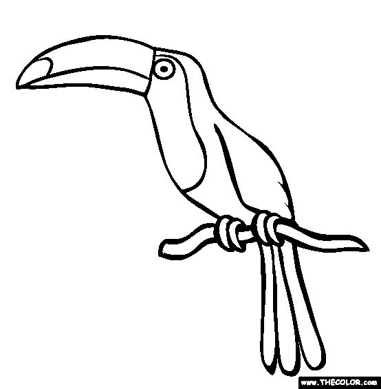 picture of toucan to color  toucan coloring page  free
