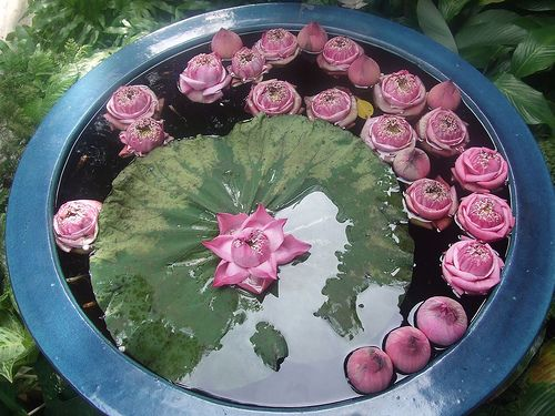 25 Best Images About Water Garden In Garden City On Pinterest