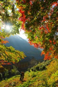 17 Best images about Fall Foliage on Pinterest | Gardens ...