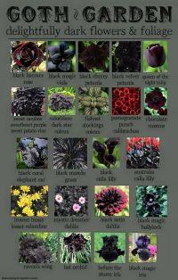 25+ best ideas about Gothic garden on Pinterest | Dark ...