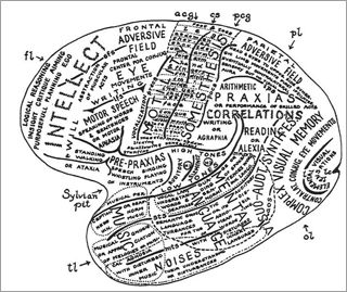 Drawing of human brain, labeling functions of different