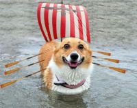 Viking dog (this would be a great place for a Thorgi pun ...